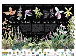 National Pollinators Week