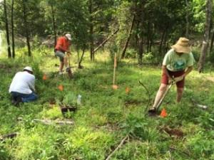 South Fork Nature Center Master Gardeners Planting Milkweed