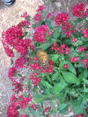 butterfly-release4
